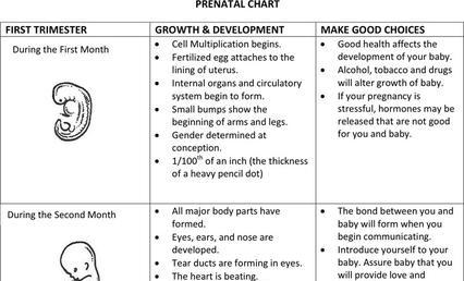 Fetal Growth Chart