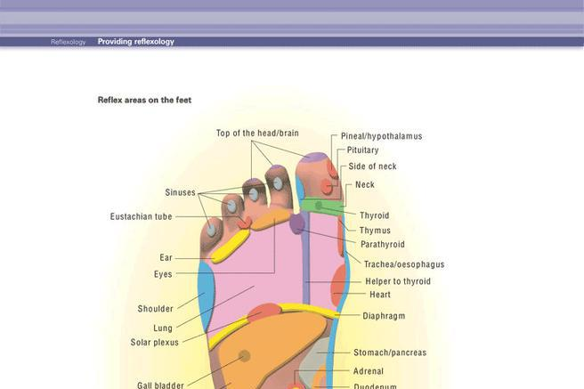 8+ Acupressure and Massage Chart Free Download