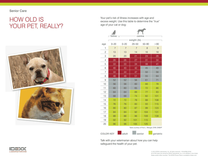 Dog Years Chart 1
