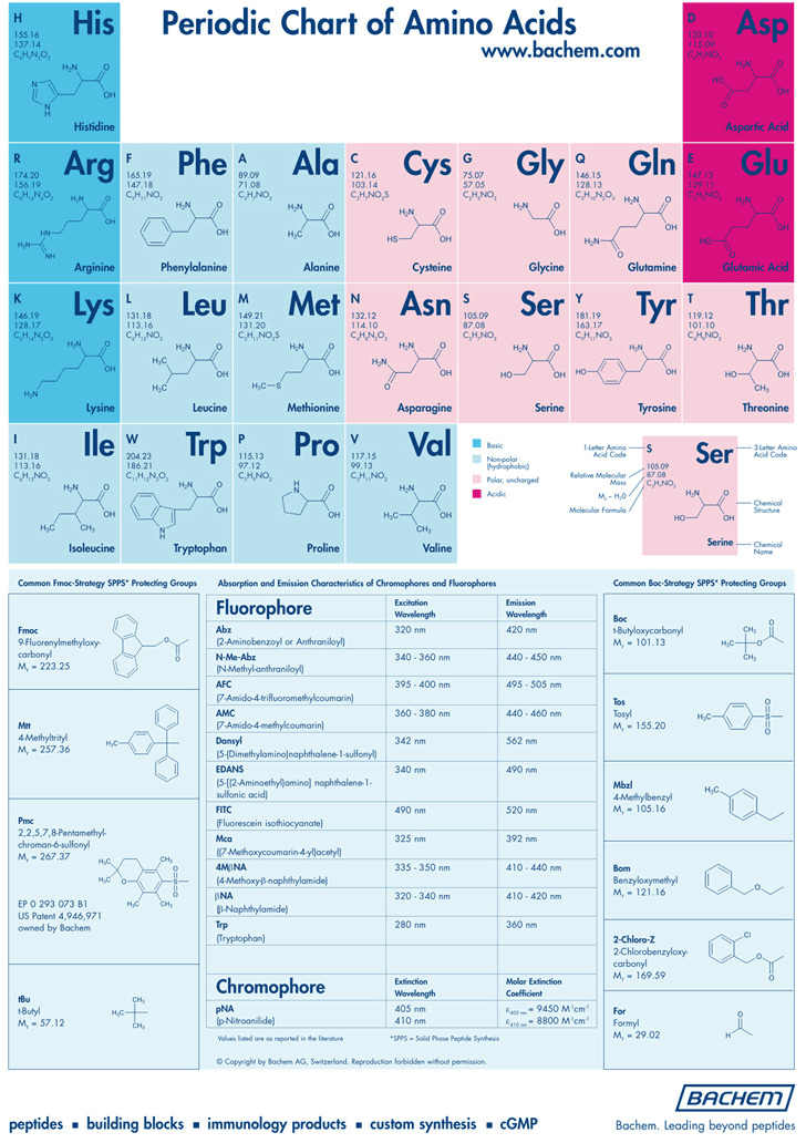 Amino Acid Chart  Download Free  Premium Templates Forms