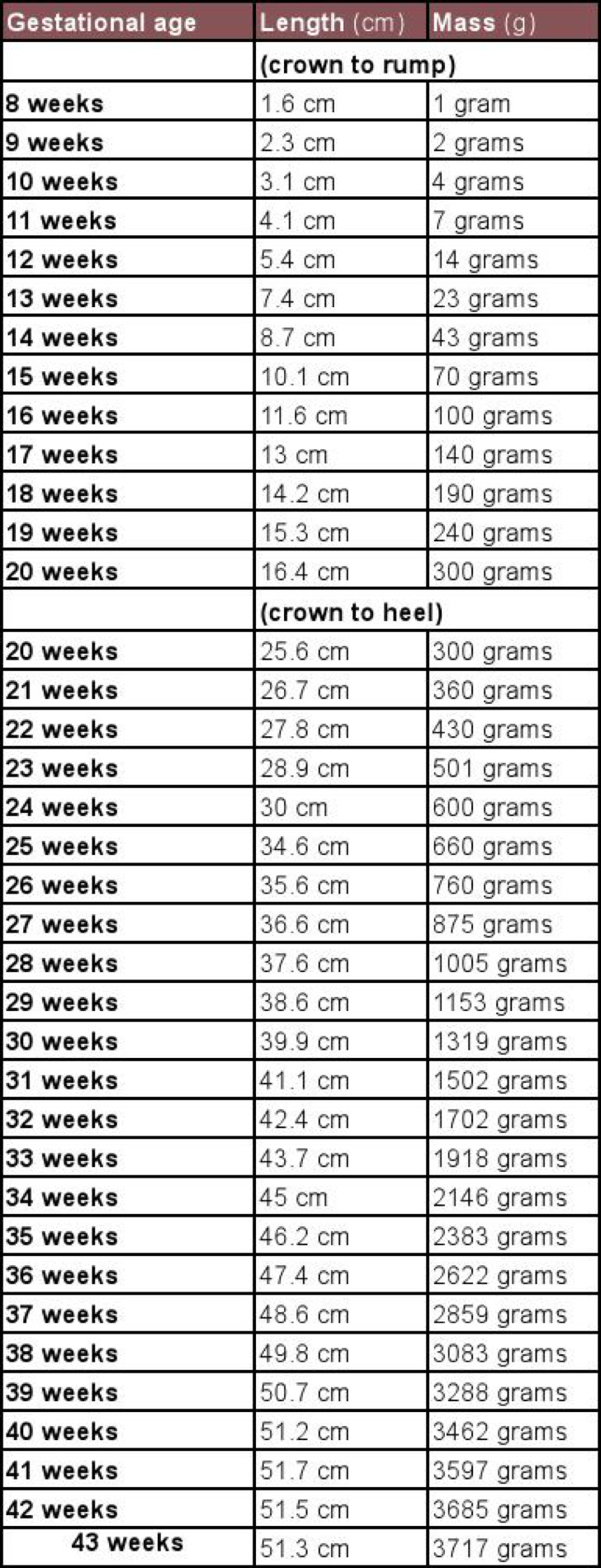 Unborn Baby Growth Chart In Excel