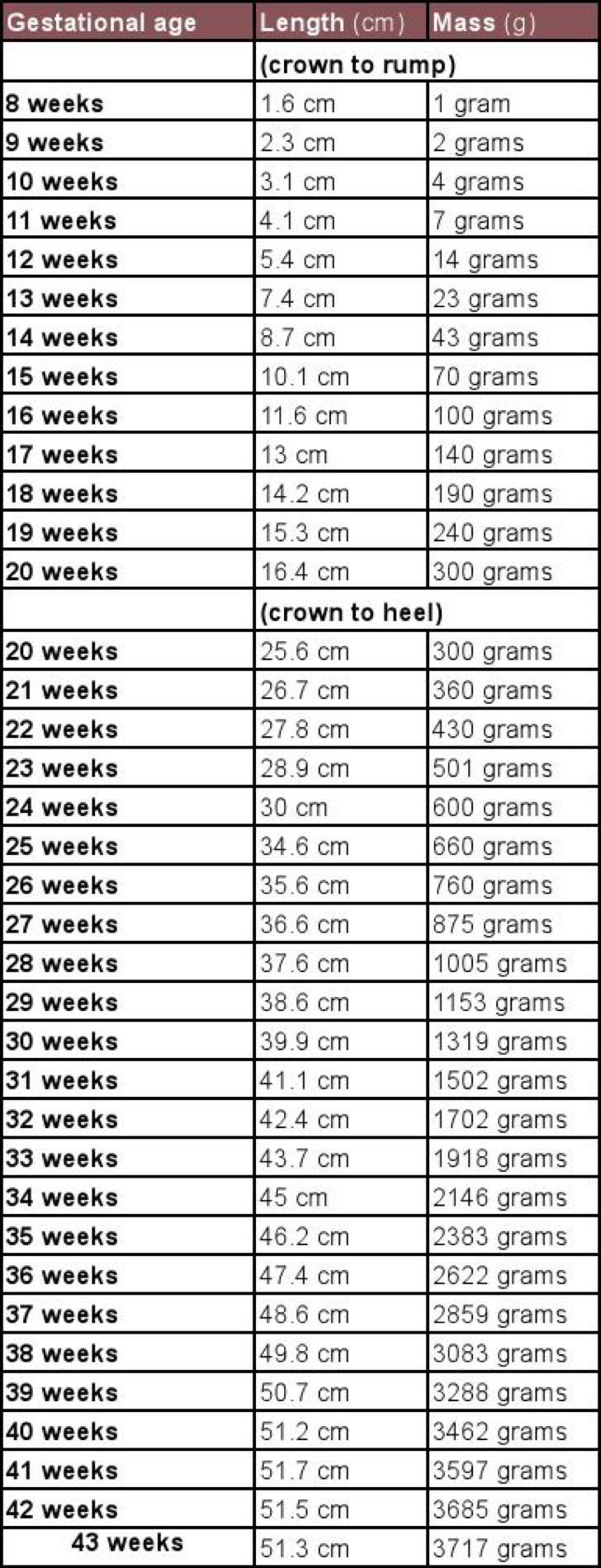 Unborn Baby Growth Chart Week By Week